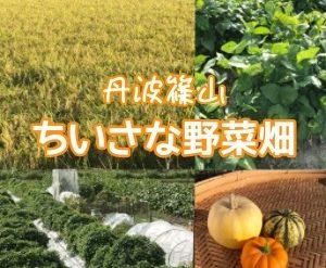 丹波篠山いのうえ黒豆農園