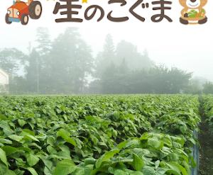 丹波篠山の小さな農家 星のこぐま Yahooストア
