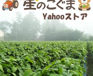 丹波篠山の小さな農家 星のこぐま
